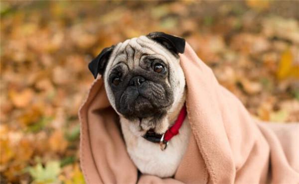 农夫色人和狗_给消费者带去更好的服务体验,让很多人想了解大嘴狗宠物加盟怎么样?